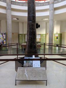 Licofita (Sigillaria). Escuela Superior y Técnica de Ingenieros de Minas. Universidad de León (España). By M.A. Díaz.