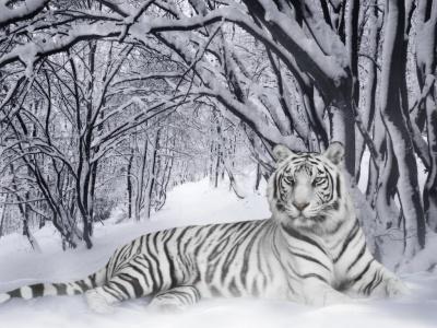 ¿esto es un tigre o una tigra?